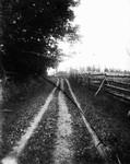 Old Home Lane, ca.1890's.  Cavendish, P.E.I.