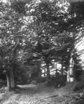 Lovers' Lane with Oliver Beech, ca.1890's.  Cavendish, P.E.I.