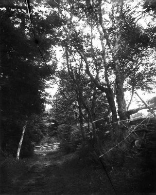 Lovers' Lane with view of fence crossing road, ca.1890's.  Cavendish, P.E.I.