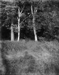 """Entrance to path over """"Log Bridge"""" below Webb's field, ca.1890's.  Cavendish, P.E.I."""
