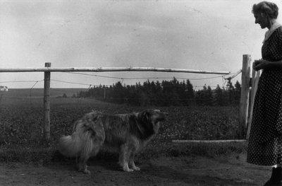 Mike the dog, ca.1915.  Cavendish, P.E.I.