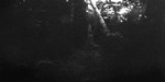 Boy in woods, Cavendish places, P.E.I., c.1890