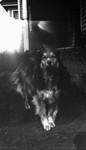 Dog, Cavendish, P.E.I.