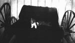 Cat on a buggy seat, Cavendish, P.E.I.