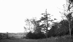Field, Cavendish, P.E.I.