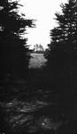 Woods and field, Cavendish, P.E.I.