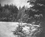 Ernest Webb's field, Cavendish, P.E.I.