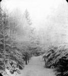 Winter view of Lover's Lane, Cavendish, P.E.I.