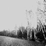 View of Lover's Lane, P.E.I.