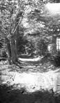 View of Lover's Lane, Cavendish, P.E.I.