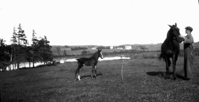 Man (unidentified), horses and foal in field, Park Corner, P.E.I.