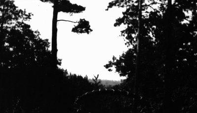 Trees, Bala, ON.
