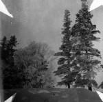 Foldable photo of trees