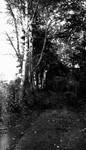 Road, Lover's Lane, Cavendish, P.E.I.