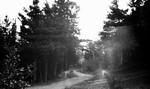 Road, Cavendish, P.E.I.?