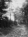 Lover's Lane, Cavendish, P.E.I.