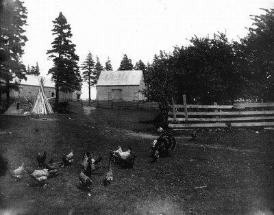 Old barnyard, Cavendish-1890's