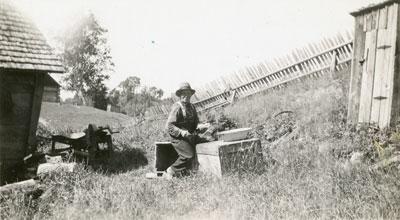 John F McAmmond filleting fish, McAmmond Homestead, Deer River, 1941