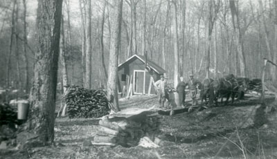 Maple Syrup Tapping, Maple Island, circa 1950