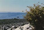 Seal Sunbathing on Rock