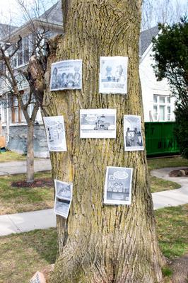 COVID-19 Comics on Tree, Waterloo