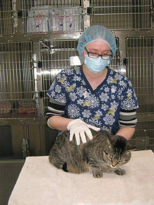 Essential Services - Registered Veterinary Technician