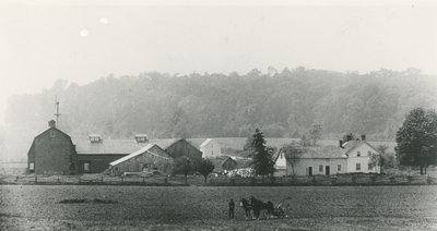 Pattemore Farm Plum Hollow