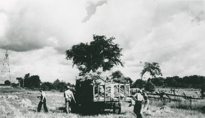 Loading stooks onto the wagon at the Myers Farm c.1945