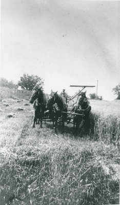 Melbourne MacDonald Cutting Hay