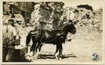 Man with Horses in Quarry