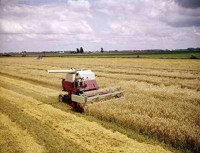 Combine Harvesting, Wallaceburg, ON