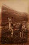 """A Native of Glen Etive"", Argyleshire"