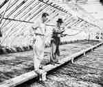 Unidentified Men Inside a Greenhouse, Simcoe, ON